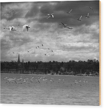 Major Migration Wood Print by Thomas Young