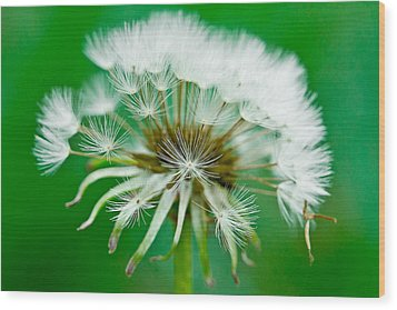 Wood Print featuring the photograph Make A Wish by Annette Hugen