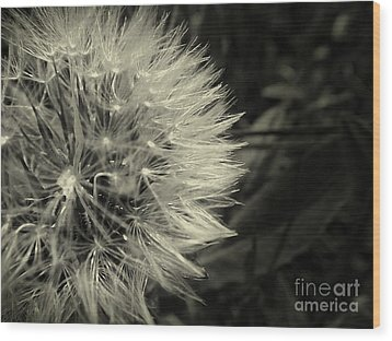 Make A Wish Wood Print by Clare Bevan