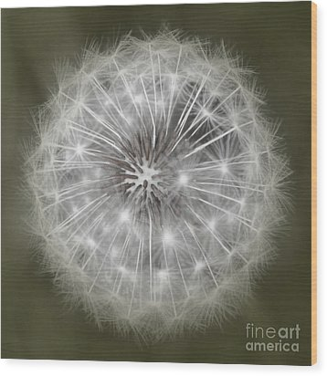 Wood Print featuring the photograph Make A Wish by Peggy Hughes