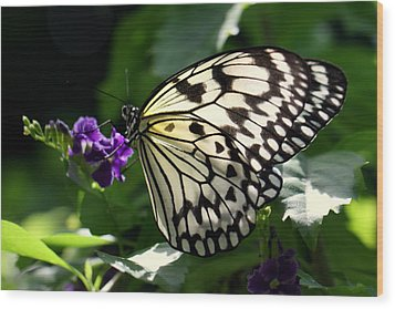 Wood Print featuring the photograph Malabar Tree Nymph  by Suzanne Stout