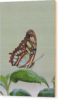 Wood Print featuring the photograph Malachite Butterfly #5 by Judy Whitton