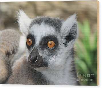 Wood Print featuring the photograph Malagasy Lemur by Sergey Lukashin