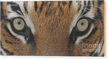 Malayan Tiger Eyes Wood Print