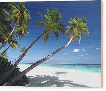 Maldives 05 Wood Print by Giorgio Darrigo