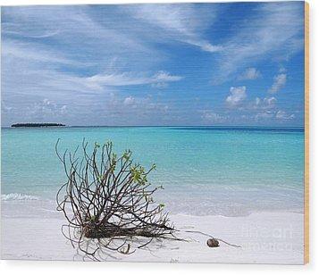 Maldives 12 Wood Print by Giorgio Darrigo