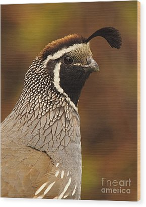 Wood Print featuring the photograph Male California Quail by Max Allen