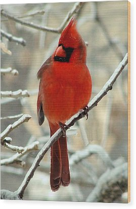 Wood Print featuring the photograph Male Cardinal  by Janette Boyd
