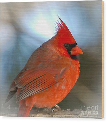 Wood Print featuring the photograph Male Cardinal  by Kerri Farley