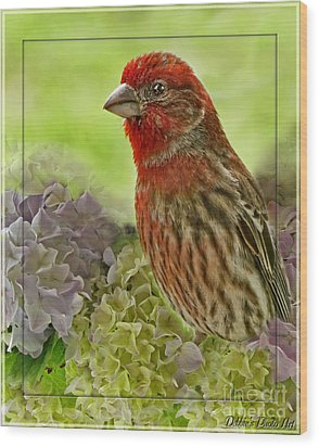 Wood Print featuring the photograph Male Finch In Hydrangesa by Debbie Portwood