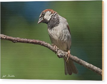 Male House Sparrow Perched In A Tree Wood Print by Jeff Goulden