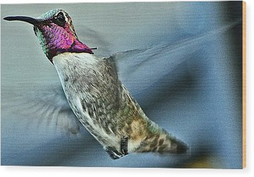 Wood Print featuring the photograph Male Hummingbird Free As A Bird by Jay Milo