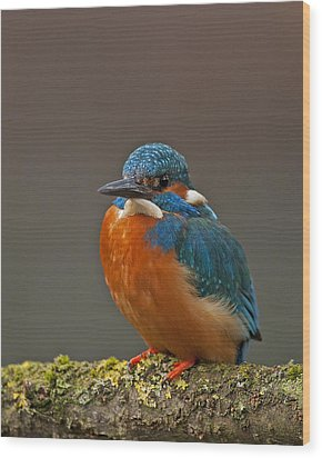 Male Kingfisher Wood Print by Paul Scoullar