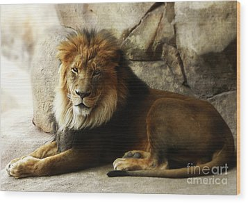 Male Lion At Rest Wood Print