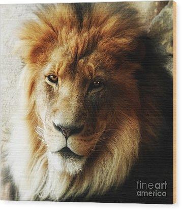 Male Lion Face Close Up Wood Print