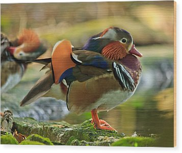 Wood Print featuring the photograph Male Mandarin Duck On A Rock by Eti Reid