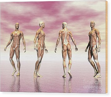 Male Muscular System From Four Points Wood Print by Elena Duvernay