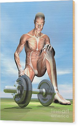 Male Musculature Looking At A Dumbbell Wood Print by Elena Duvernay