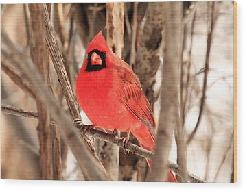 Male Northern Cardinal Wood Print by Michael Allen
