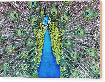 Male Peacock Wood Print by Cynthia Guinn