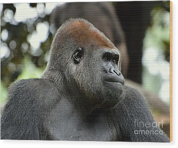 Wood Print featuring the photograph Male Silverback by Lisa L Silva