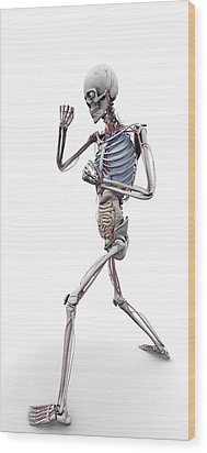 Male Skeleton And Organs, Artwork Wood Print by Science Photo Library