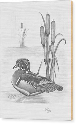 Male Wood Duck Wood Print