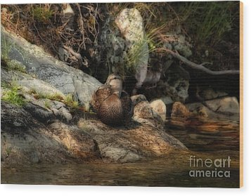 Wood Print featuring the photograph Mallard Duck Onaping 2 by Marjorie Imbeau
