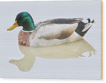 Mallard Duck Wood Print by Paulette Thomas