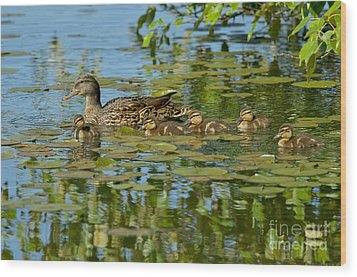 Mallard Mom And The Kids Wood Print by Sharon Talson