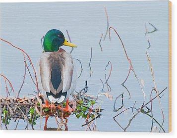 Wood Print featuring the photograph Mallard by Ram Vasudev