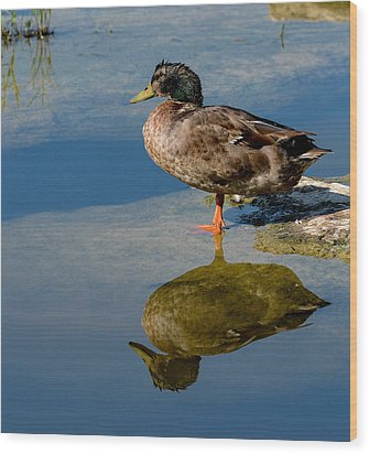 Mallard Reflection Wood Print