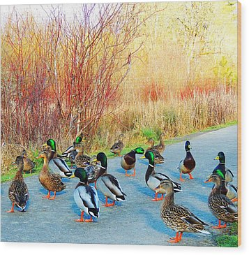 Mallards In The Park Wood Print