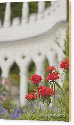 Maltese Cross Flowers Wood Print by Anne Gilbert