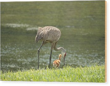 Mama And Chick Wood Print by Carol Groenen