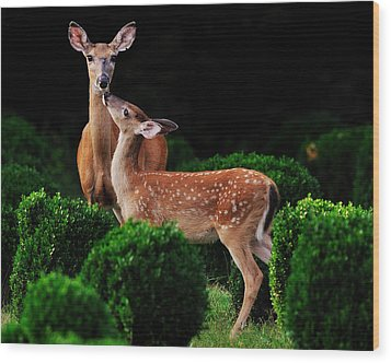 Mama And Her Fawn Wood Print by Angel Cher