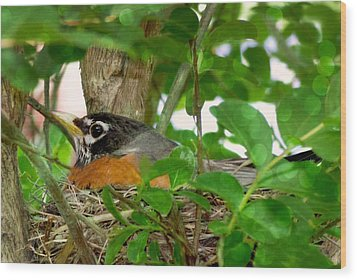 Wood Print featuring the photograph Mama Bird by Melissa Messick