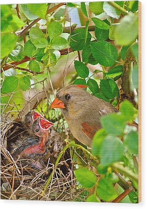 Mama Bird Wood Print by Frozen in Time Fine Art Photography