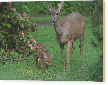 Mama Deer And Baby Bambi Wood Print