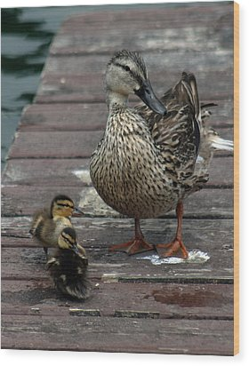 Mama Duck And Ducklings Wood Print