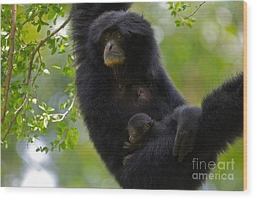 Mamas Hammock Wood Print by Ashley Vincent