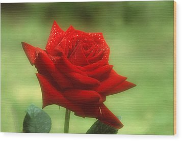 Mama's Red Rose Wood Print