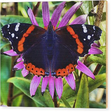 Mammoth Butterfly Wood Print by Dan Sproul