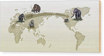 Mammoth Evolutionary Migration Wood Print by Spl
