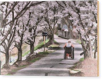 Man In Wheelchair Under Cherry Blossoms Wood Print by Dan Friend