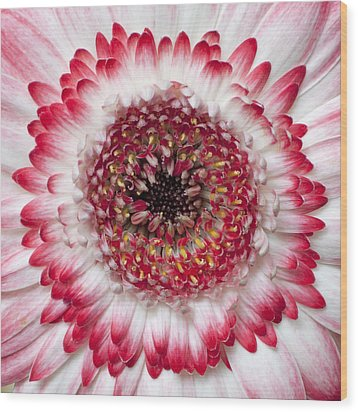 Mandala Wood Print by Daniel Csoka