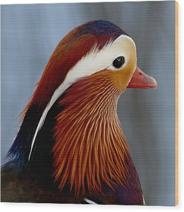 Wood Print featuring the photograph Mandarin Duck by Bob and Jan Shriner