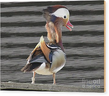 Mandarin Duck Wood Print by Donna Brown