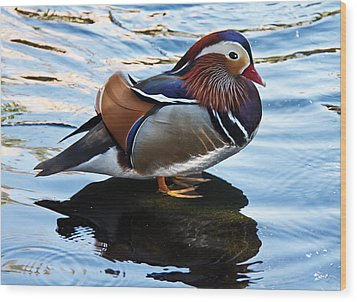 Mandarin Duck Wood Print by Robert Bales