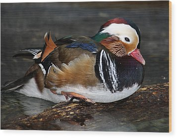 Mandarin Duck Wood Print by Suzanne Stout